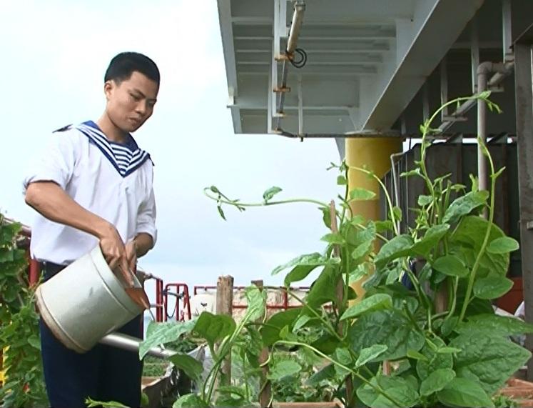 Các nhà giàn tự túc được 70-85 % rau xanh .