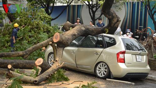 TP.HCM: Mưa lớn, cây xanh đổ đè hàng loạt ô tô, xe máy