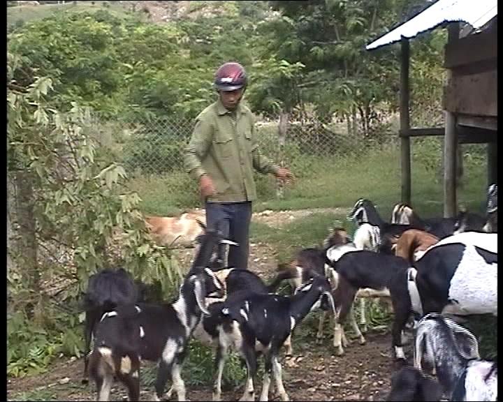Chăn nuôi dê mang lại hiệu quả kinh tế cao.