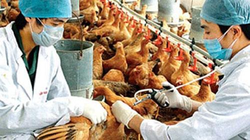 Quảng Bình tăng cường phòng chống dịch cúm gia cầm H5N1