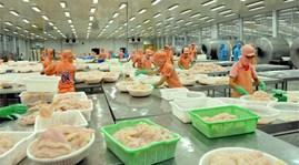 Mỹ lại áp thuế cao với cá tra, cá basa Việt Nam