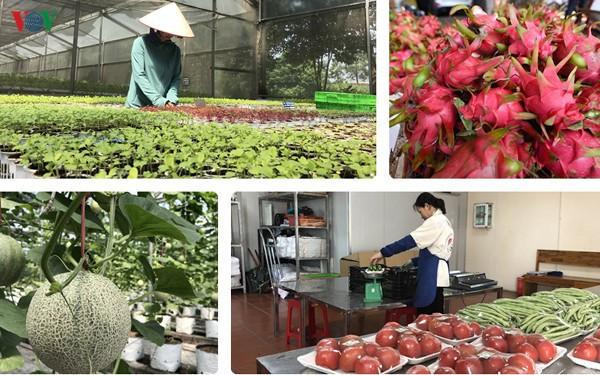 Thị trường quyết định tăng trưởng của ngành nông nghiệp