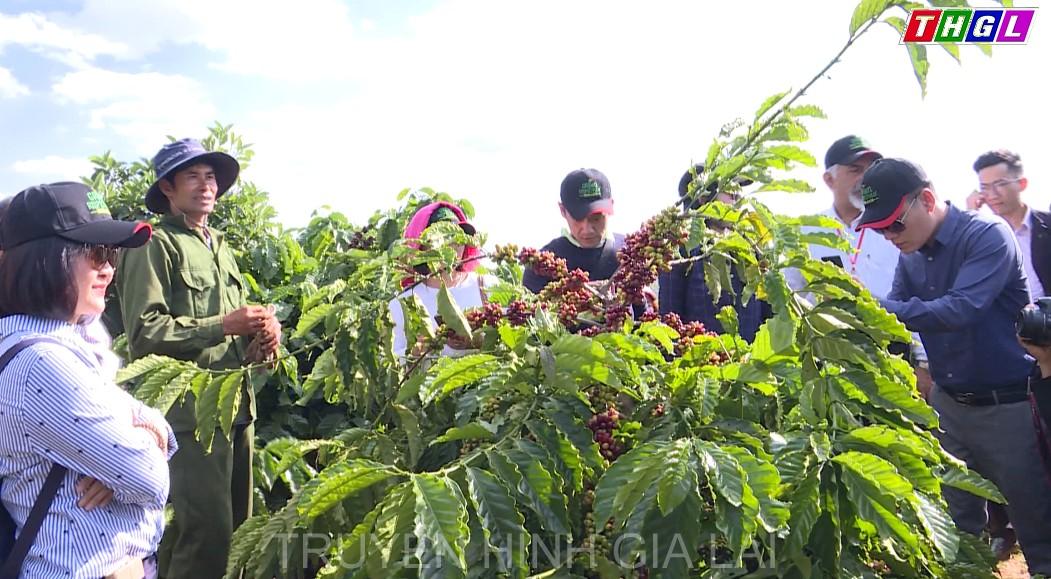 Tham quan mô hình trồng cà phê bền vững của Công ty TNHH Nestle Việt Nam tại huyện Ia Grai
