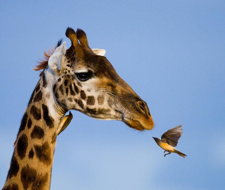 Vẻ đẹp của động vật hoang dã ở những nơi nguy hiểm nhất thế giới