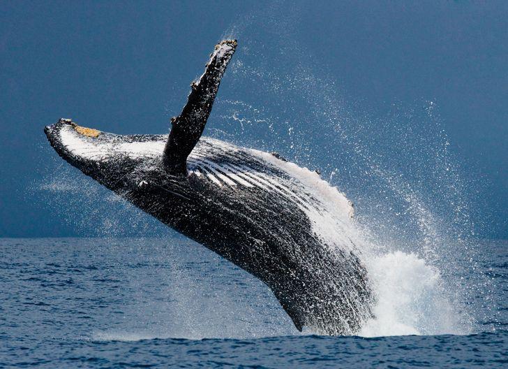 Những loài động vật có thể sống lâu nhất mà không cần thức ăn