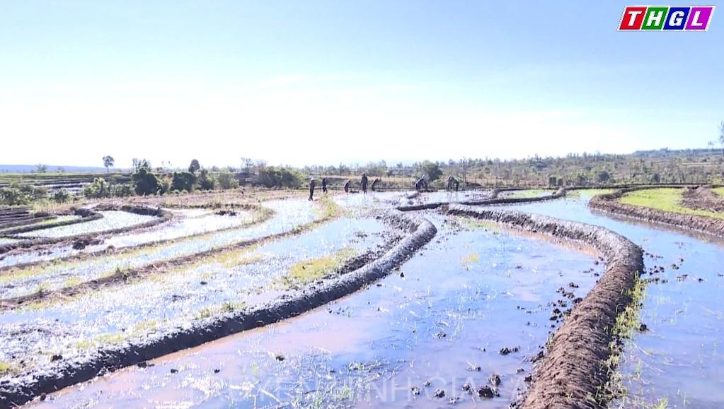 Sở Nông nghiệp và Phát triển Nông thôn sơ kết sản xuất vụ Đông – Xuân năm 2019- 2020