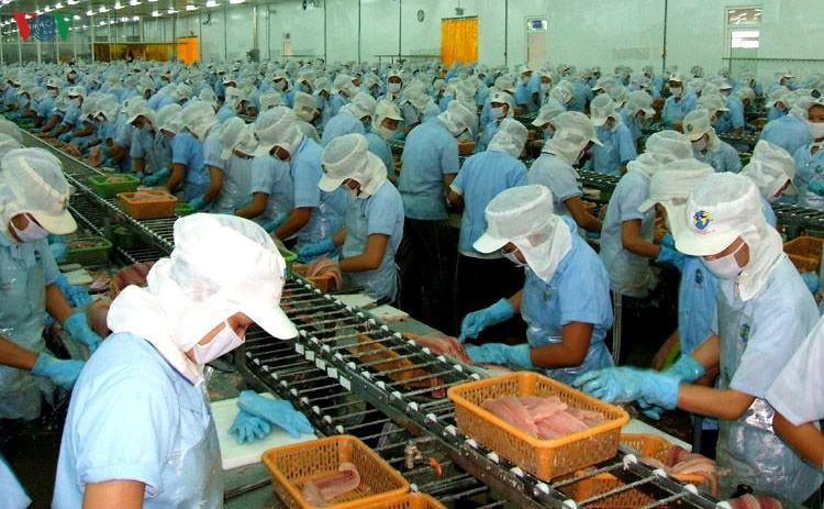Bất chấp dịch Covid-19, xuất khẩu tôm Việt Nam vẫn tăng 5,7%