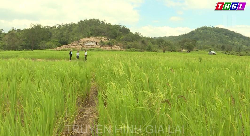 Ngành Nông nghiệp và Phát triển nông thôn (NN&PTNT) tỉnh được giao 951 biên chế công chức, viên chức