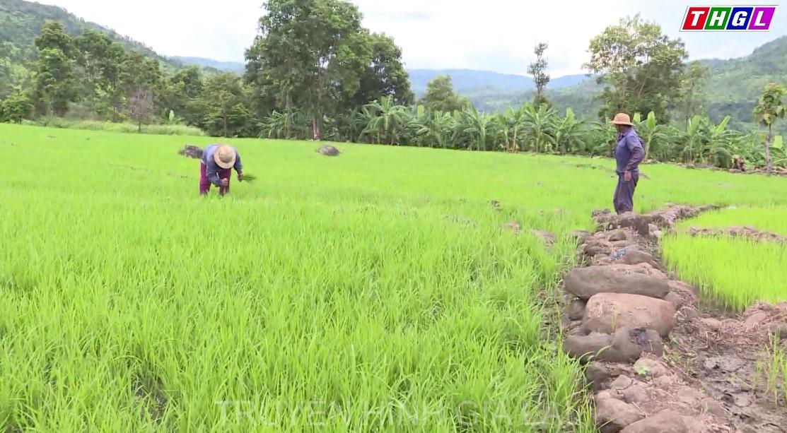 Nhân dân các dân tộc tỉnh Gia Lai mong muốn tiếp tục được quan tâm nâng cao chất lượng đời sống cho người dân