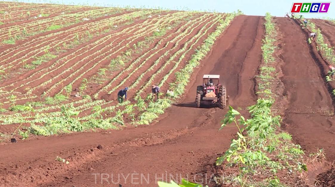 Các hợp tác xã nông nghiệp trên địa bàn tỉnh Gia Lai đang dần tiếp cận ứng dụng công nghệ tiên tiến trong sản xuất nông nghiệp
